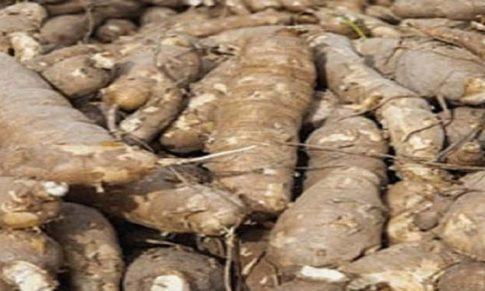 Business Plan on Cassava Processing